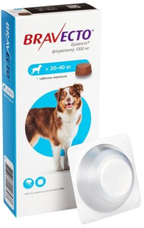 Блохи и клещи - летняя напасть, съедающая собак. Как помочь четвероногому?