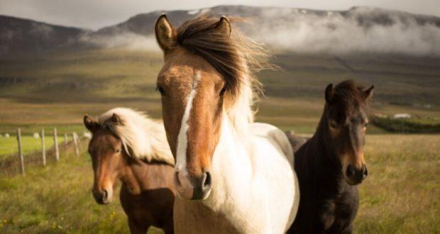 31 августа – это день Лавра и Фрола Лошадников. Или — Лошадиный праздник