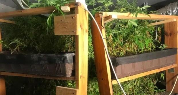 В Бахчисарае полиция обнаружила конопляную «ферму»