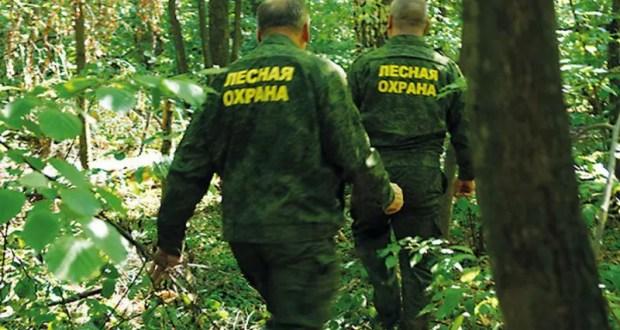 В Крыму нарушитель избил лесников. Что решил суд