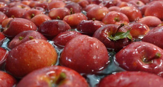 Аграрии Крыма собрали более 20 тысяч тонн яблок