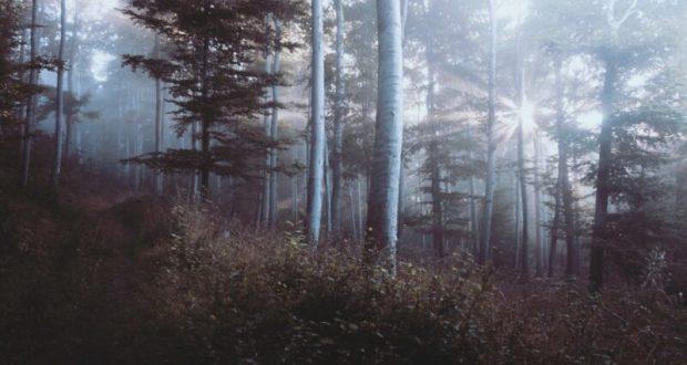 Погода в Крыму - сухо, тепло, но туманы