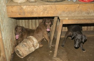Living Conditions of Happy Endings Animal Rescue in Nashville Tennessee
