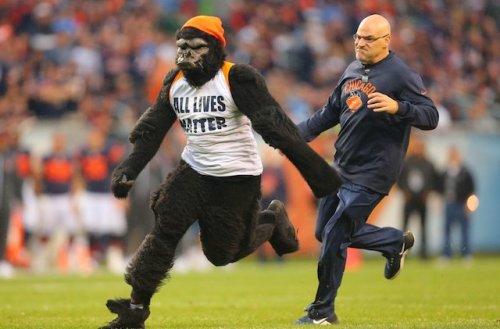 Video: Gorilla Runs Into Bears, Lions On Football Field
