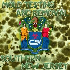 Mold Removal Southern NJ