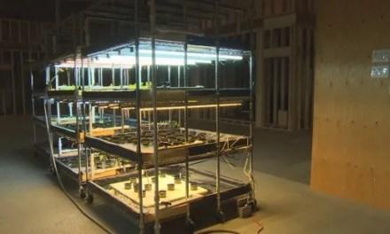 Minar criptomoedas em Canadá agora também serve para fins Agrícolas