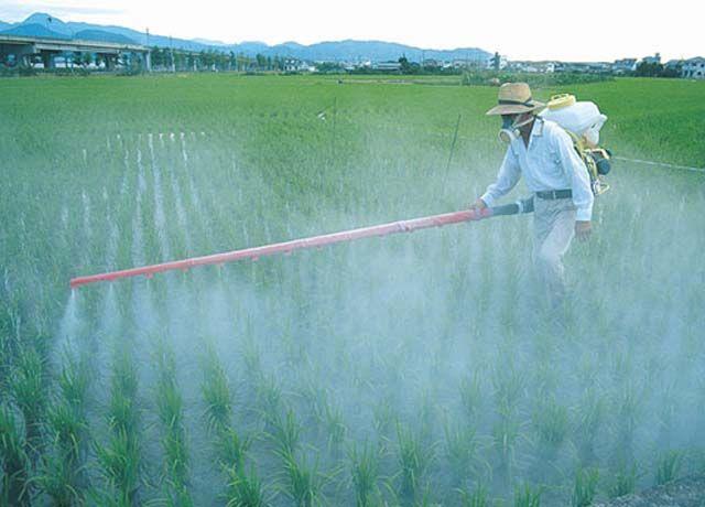 Mercado de fertilizantes
