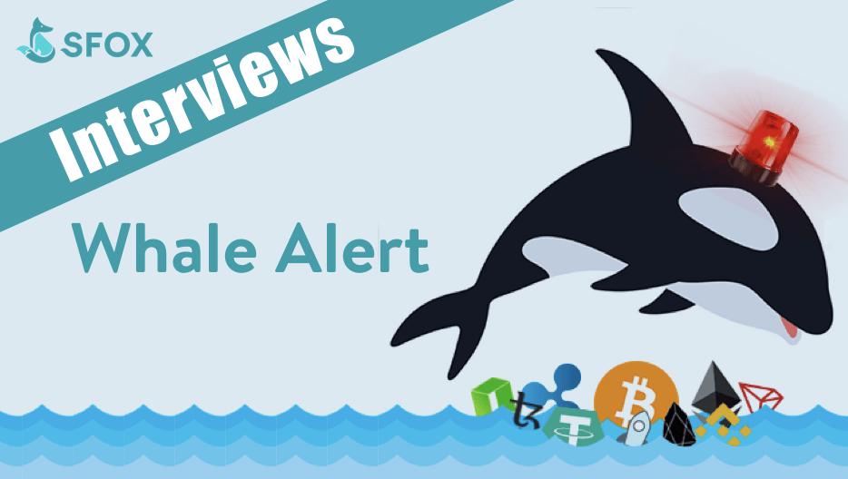 whale alert telegram