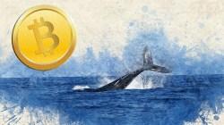 Entrevistando a una ballena crypto