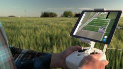 IA Verde: Inteligencia Artificial para agricultura