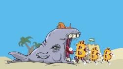 Lo más destacado de las ballenas crypto: Bitcoin y su acumulación