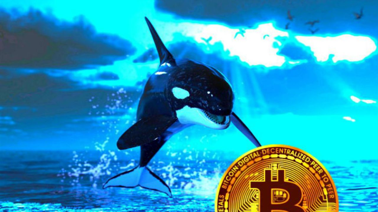 , Whales lurking before Halving Bitcoin, Forex-News, Forex-News