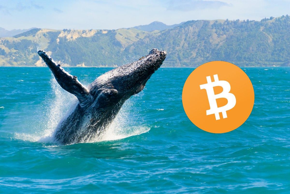 ¿Qué hacen las ballenas Bitcoin para cerrar el mes de noviembre?