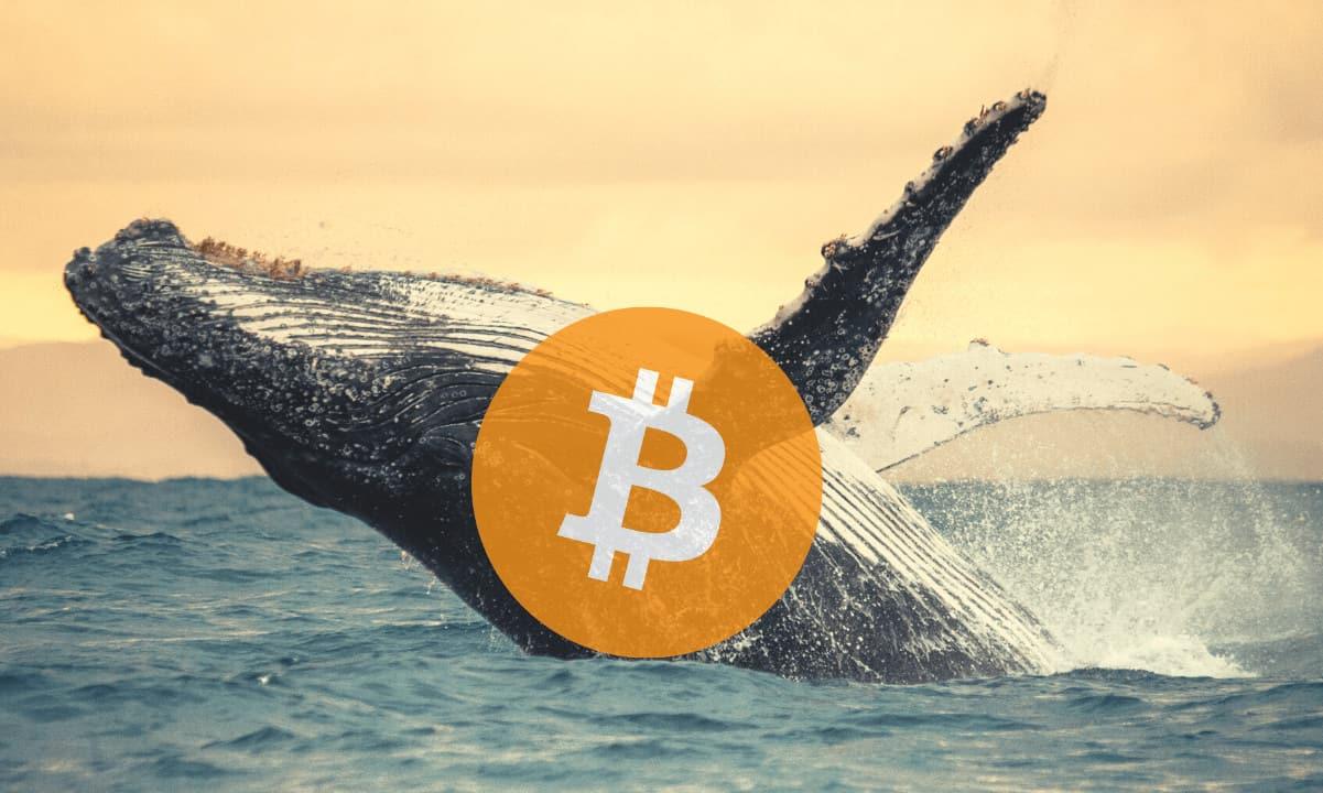 Resumen semanal de actividad: Las Ballenas Bitcoin movilizan cerca de 220.569 BTC