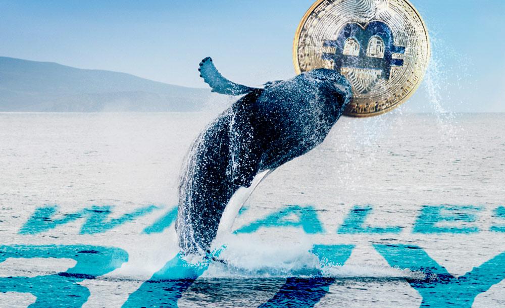 Resumen semanal de la actividad de las ballenas Bitcoin: movilizan 229.172 BTC
