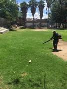 Mantenimiento y poda en Parque Raza Caxcana