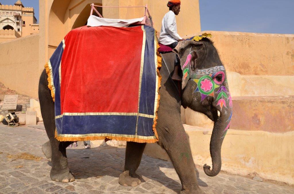 Jaipur - DSC9602.jpg
