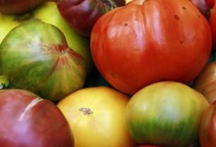 томаты,биоудобрение