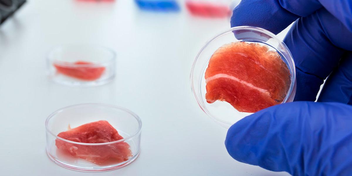 биопринтер,клекта мяса,клетка рыба