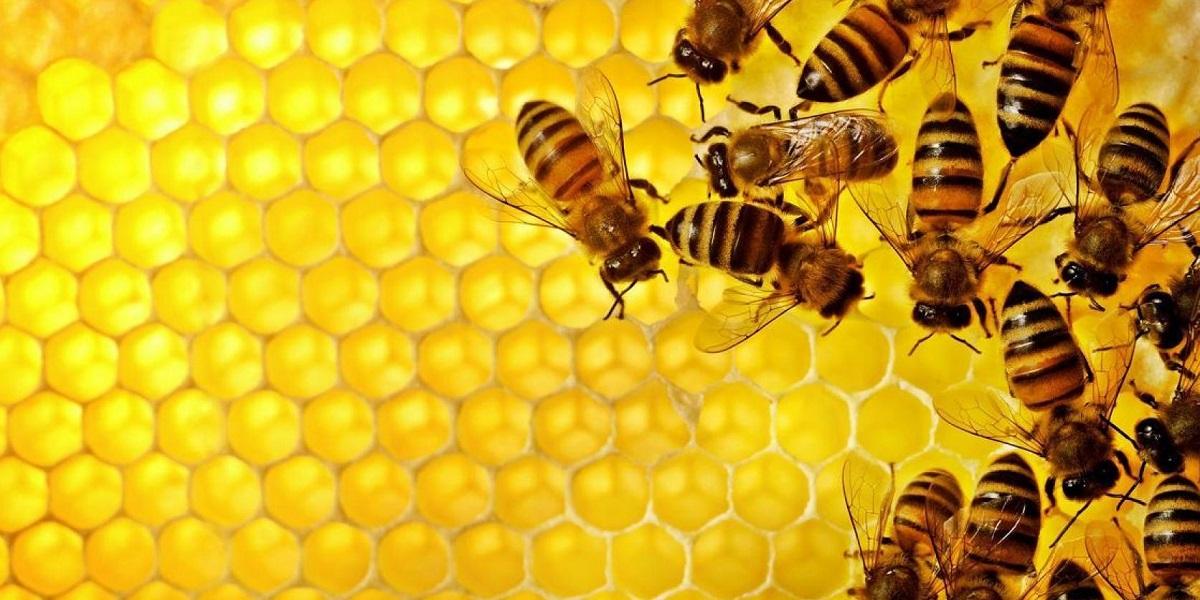 пчелы,ЕС,Bayer