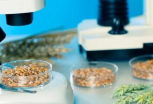 биоинженерия,продукты,хлеб,ГМО
