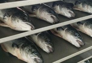 Cooke Aquaculture,лосось,Канада