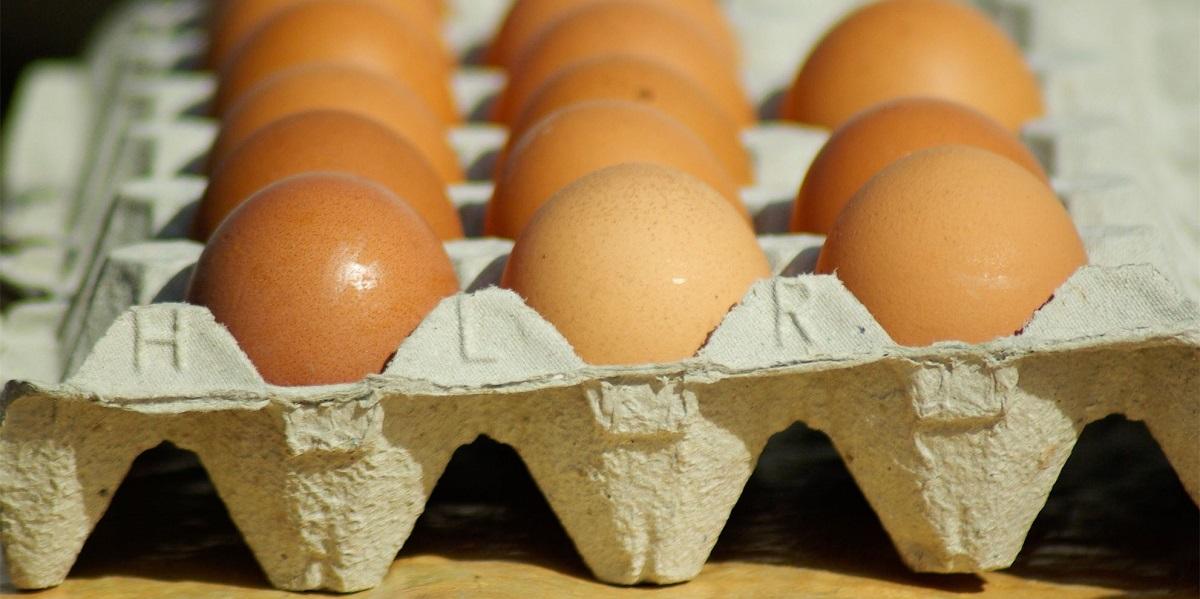 мискантус, яйцо,экология,упаковка,тара,одноразовая посуда,био