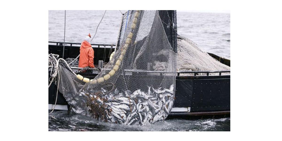 Сеть, рыболовство, промысел