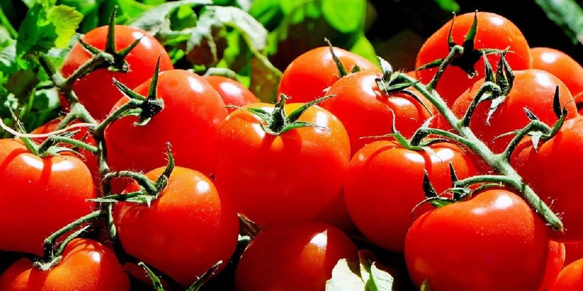 Овощи, экспорт, черри,
