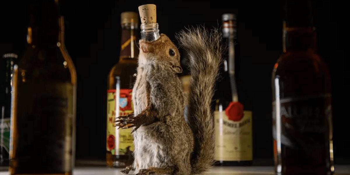 Швеция, выставка, отвратительный алкоголь