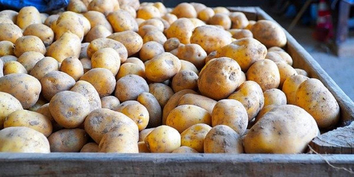 Украина, импорт, запрет, картофель
