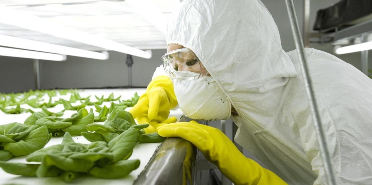 ГМО, продукты, пищевая угроза, США, исследование