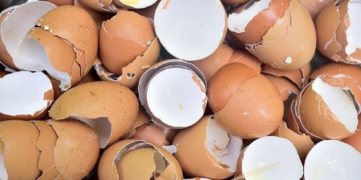 Яйцо, скорлупа