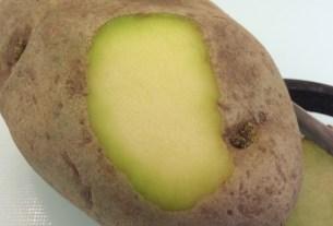 зелёный пигмент, соланин, отравление картофелем