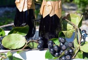 черноплодка, черная рябина, сок от коронавируса, Германия