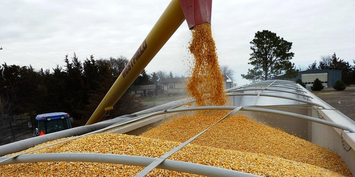 серые схемы, вывоз зерна, экспорт пшеницы