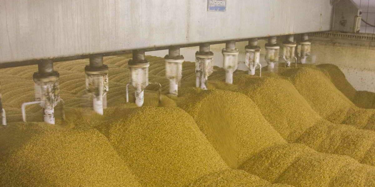 «Мираторг» иMondelez, сырье-зерно, цены на зерно, экспорт зерна