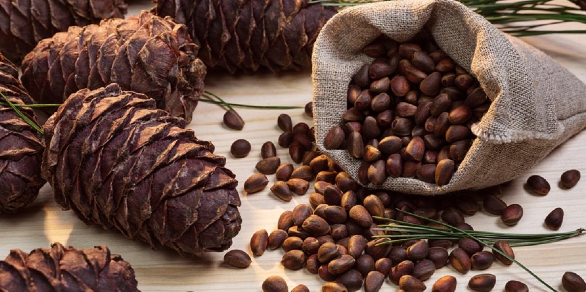 Алтай, кедровый орех, производство