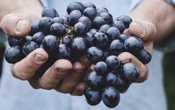 Дагестан, урожай, виноград, рекорд, Минсельхозпрод