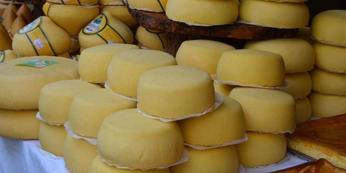 химозин, химозин в сыре, фермент химозин, «Промбиотех» АлтГУ