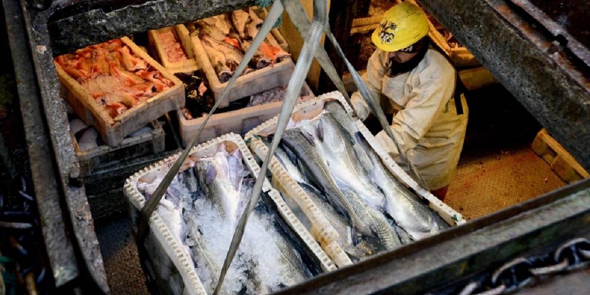 Росрыболовство, Илья Шестаков, рынок рыбы, стабилизация, рыбные интервенции