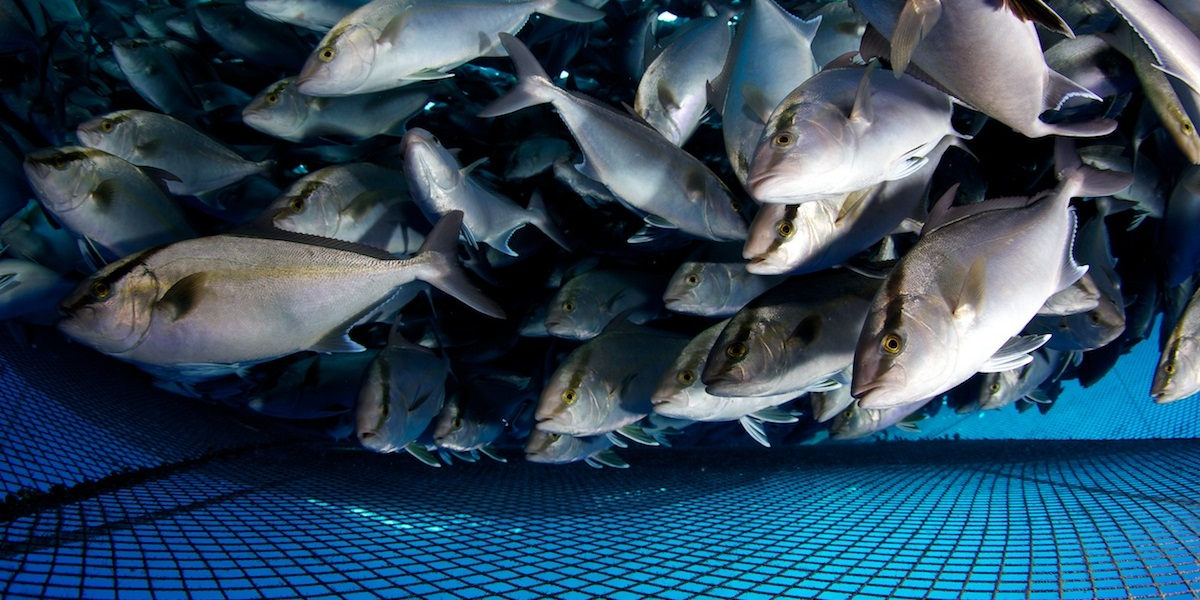 эхолот, количество рыбы в садке, посчитать рыбу, эхолот для аквакультуры, SINTEF Ocean
