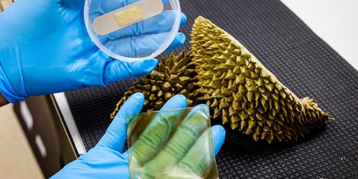 Сингапур, новая разработка, шелуха, дуриана, фрукты, антибактериальный пластырь