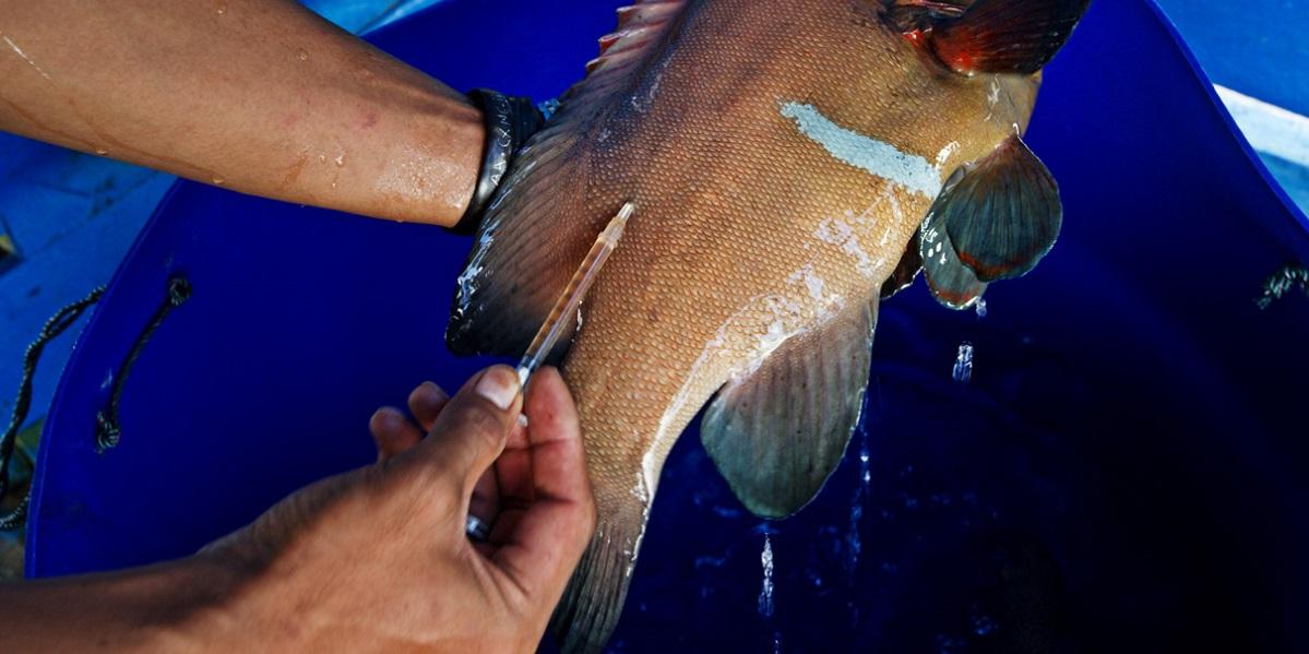 антибиотики, китайские антибиотики, пенициллин, укол рыбы, Китай антибиотик