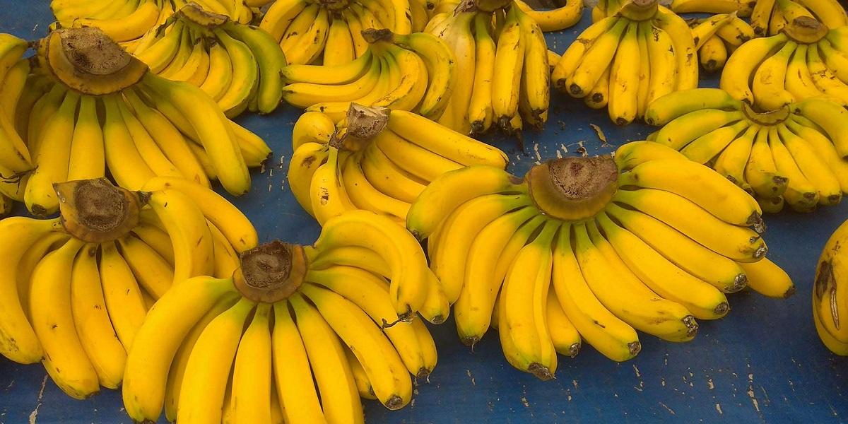 Бананы Cavendish, почвенный грибок, гибель бананов