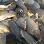 Росрыболовство, улов любительский, рыба в лодке, Приморье
