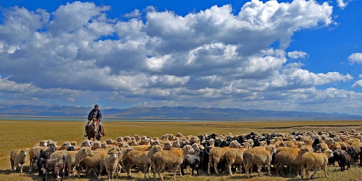 Казахстан, день пастуха, овцеводство, сельское хозяйство, животноводство