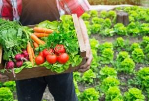 «Иннопрактика», биоземледелие. биопрапараты, удобрения, фермерство
