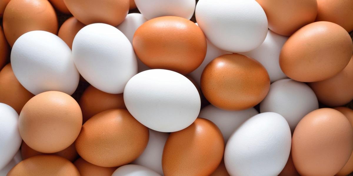 Краснодарский край, Россельхознадзор, яйца без документов, опасные яйца