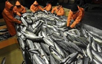 Рыба, экспорт, Африка, Россельхознадзор, статистика